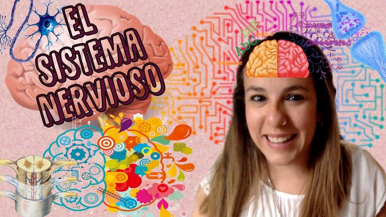 El Sistema Nervioso - Bio[ESO]sfera - Biología