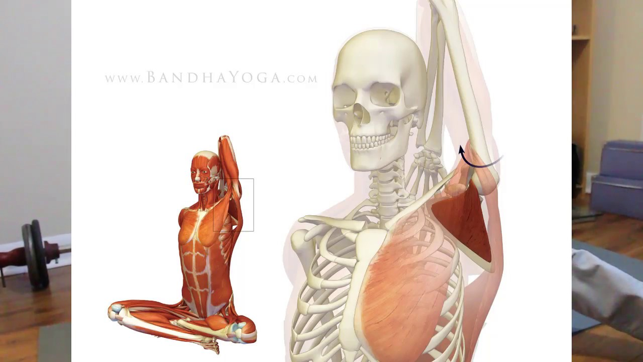 Quick fix for shoulder pain subscapularis release youtube