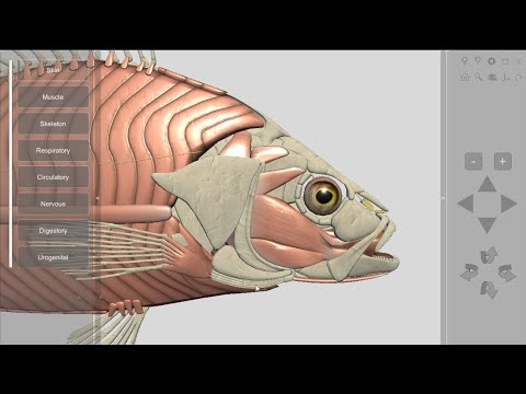 3D Fish Anatomy For Desktop