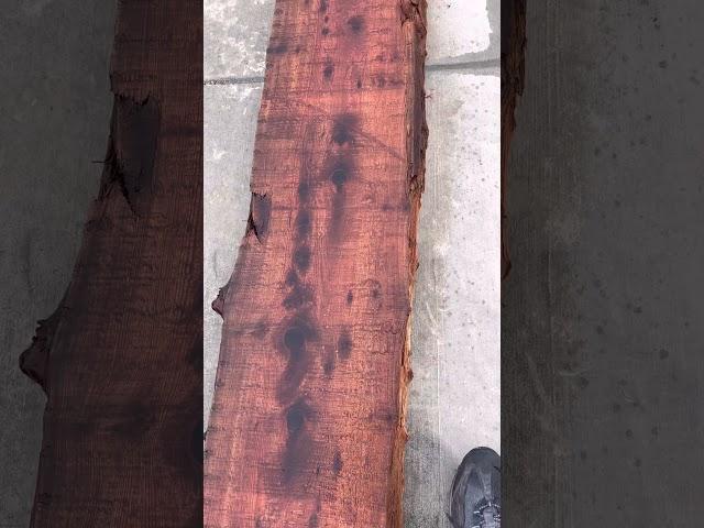 Redwood Slab #17