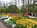 Rotterdam & Keukenhof Gardens  4/21/2017