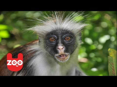 cheeky monkey dating