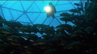 Cómo las Granjas Marinas de Peces podrían ayudar al Mundo