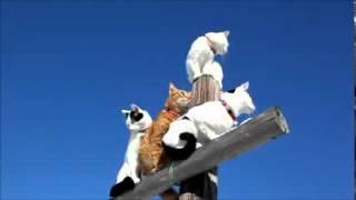 TOP Cat Litter Toilet Training