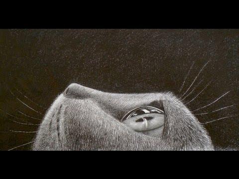 Cómo Dibujar Pelo Animal: Ojo De Gato En Perspectiva - Arte Divierte