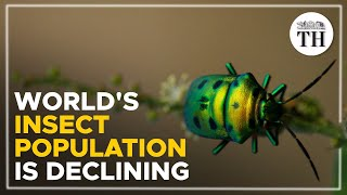The world's insect population is declining