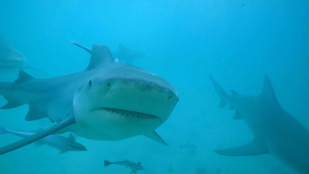 Nos voisins les requins : test de la barrière souple pour observer les requins