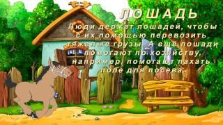 Домашние животные. Видео для детей с голосами домашних животных