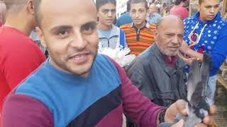 سوق الحمام من المحله الكبري، الصحبه الحلوه،1-12-2018(جEgyptian pigeon's market١)