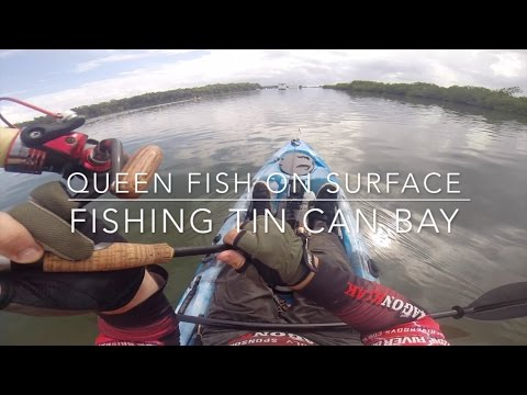 75cm Queen Fish On Surface Fishing Tin Can Bay On Dragon Kayak