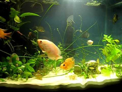 20 GALLON PLANTED CICHLID FISH TANK   YouTube