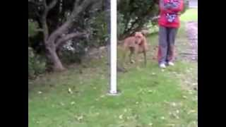 Dog Training In Kent