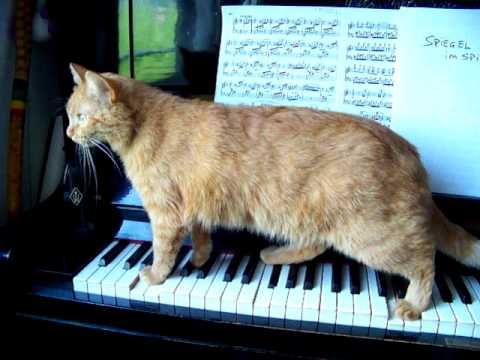 My cat plays the piano