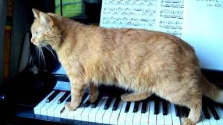 猫が演奏するピアノ、その不思議な旋律に聞きほれる