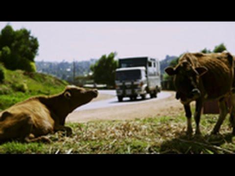 Vlaanderen Vakantieland: Expeditie Kenia en Tanzania 2