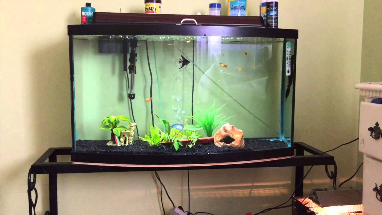 How to take care of angelfish and what size tank you need for How to take care of fish tank