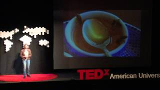 Behind the Buzz: The Honeybee in Global Politics | Eve Bratman | TEDxAmericanUniversity