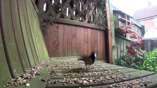 Gopro Bird Watching - Arbor
