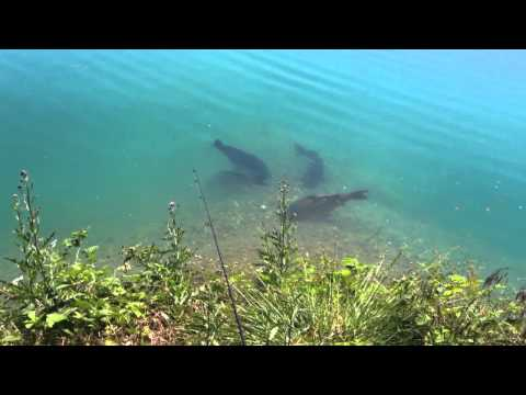 Carp Fishing - Free Spirit 3 or 4 Forties The Dream Opportunity