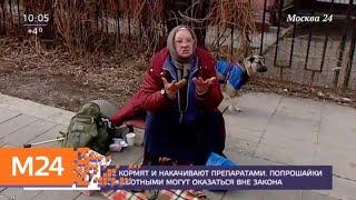 Смотреть видео Попрошайничество с животными могут запретить в России - Москва 24 онлайн