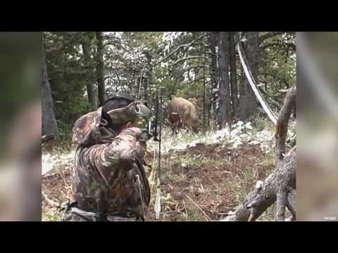 Close Range Elk Bowhunting