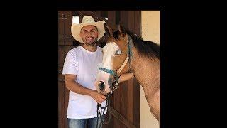 Baixar Mano Walter Mostrando os Novos Cavalos do Haras MW