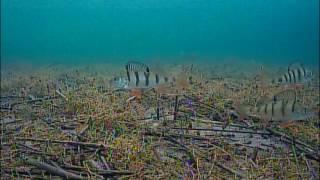Озеро Смолино, шикарная рыбалка! Поиск рыбы камерой FocusFish.