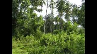 Coconut Land For sale in Kuliyapitiya (www.ADZking.lk)