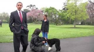 President Obama's new dog  Bo Obama arrives at White House
