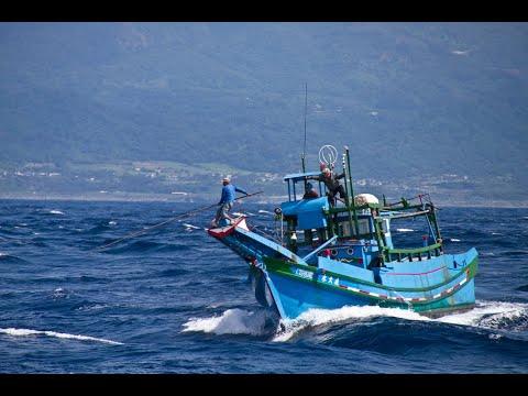 __traditional harpoon fishery caught sailfish in east coast Taiwan