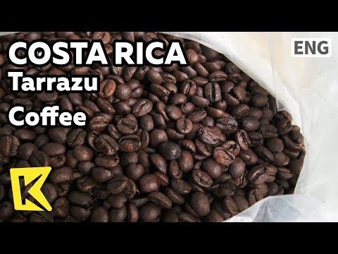 【K】Costa Rica Travel-Tarrazu[코스타리카 여행-타라주]품질 좋은 거피 생산지/Coffee/Farm/Caturra/Chorreador