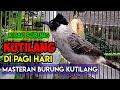 Burung Kutilang Gacor Di Pagi Hari  Mp3 - Mp4 Download