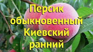 Персик обыкновенный Киевский ранний. Краткий обзор, описание prunus persica Киевский ранний