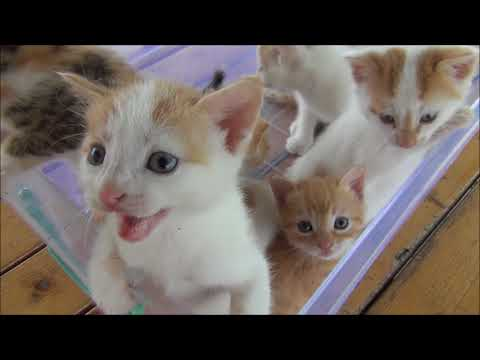 Kittens meowing too much cuteness Funny Video 2018