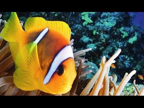 Warum Nemo sein Konto bei der Deutschen Bank kündigt