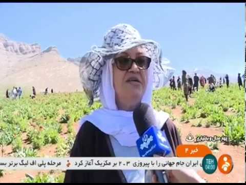 Iran Plane Fritillaria, Chaharmahal & Bakhtyari دشت لاله هاي واژگون چهارمحال و بختياري ايران