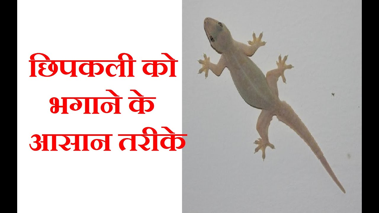 Home Remedies To Remove Lizards