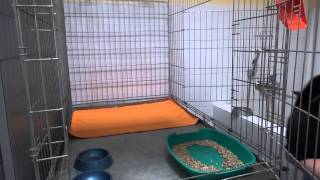 """Заселение Кота в Гостиницу для животных """"ДРУГ"""""""