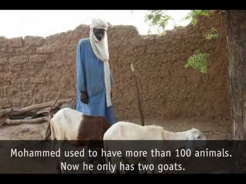 Niger food crisis - Tahoua region, July 2010