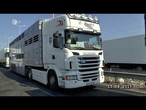 21.11.2017 ZDF - 37 Grad - Geheimsache Tiertransporte - Wenn Gesetze nicht schützen