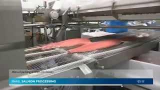 Производство охлажденного филе семги. Automation in salmon fillet processing(, 2014-07-22T05:24:17.000Z)