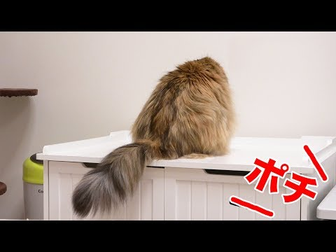 他の猫の名前を呼び続けても、自分の名前で反応できる?