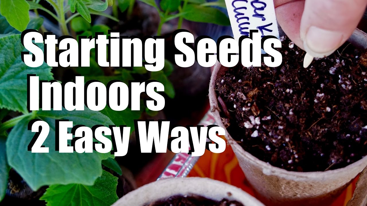 Start Garden Seeds Indoors Starting seeds indoors for your spring garden 2 easy ways 10 starting seeds indoors for your spring garden 2 easy ways 10 garden series 1 season 2 workwithnaturefo