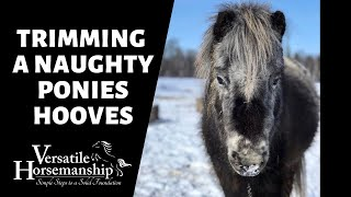 🔴 TRIMMING A NAUGHTY PONIES HOOVES (live-stream) // Versatile Horsemanship