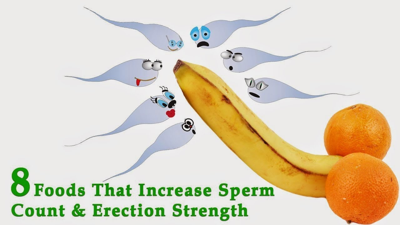 increasing canine sperm count