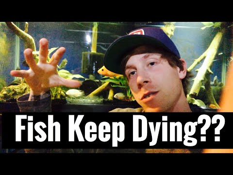 Aquarium Fish Keep Dying? Dead Fish Tank Problem