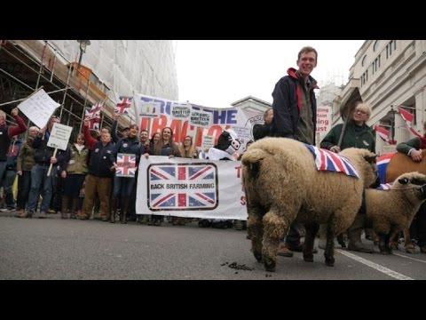 Farmers march with sheep, cows in London against cheap milk