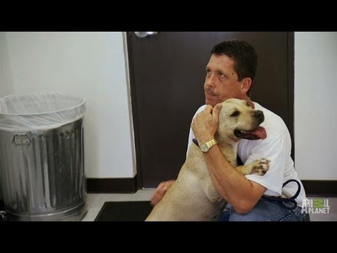 Prison Dogs in Need   Pit Bulls and Parolees