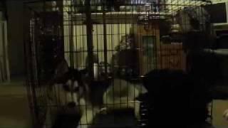 Crate Training Niko.mov