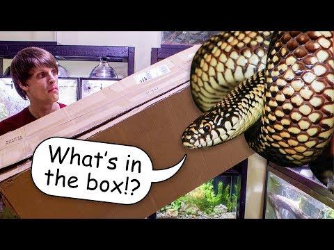 Big Item Unboxing for Reptile Enclosure